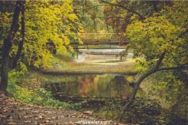 Arboretum Nedir?