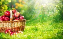 Elmanın Faydaları Nelerdir?