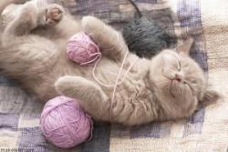 Evde Kedi Bakmanın Püf Noktaları