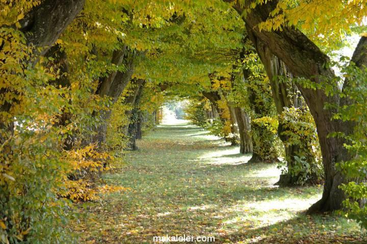 Gürgen Ağacının Özellikleri Nelerdir?