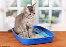 Kedi Kumu Nasıl Kullanılır?