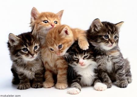 Kediler Neden Miyavlar?