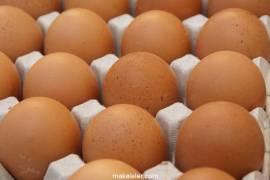 Organik Yumurta Nedir, Normal Yumurtadan Farkı Nelerdir?